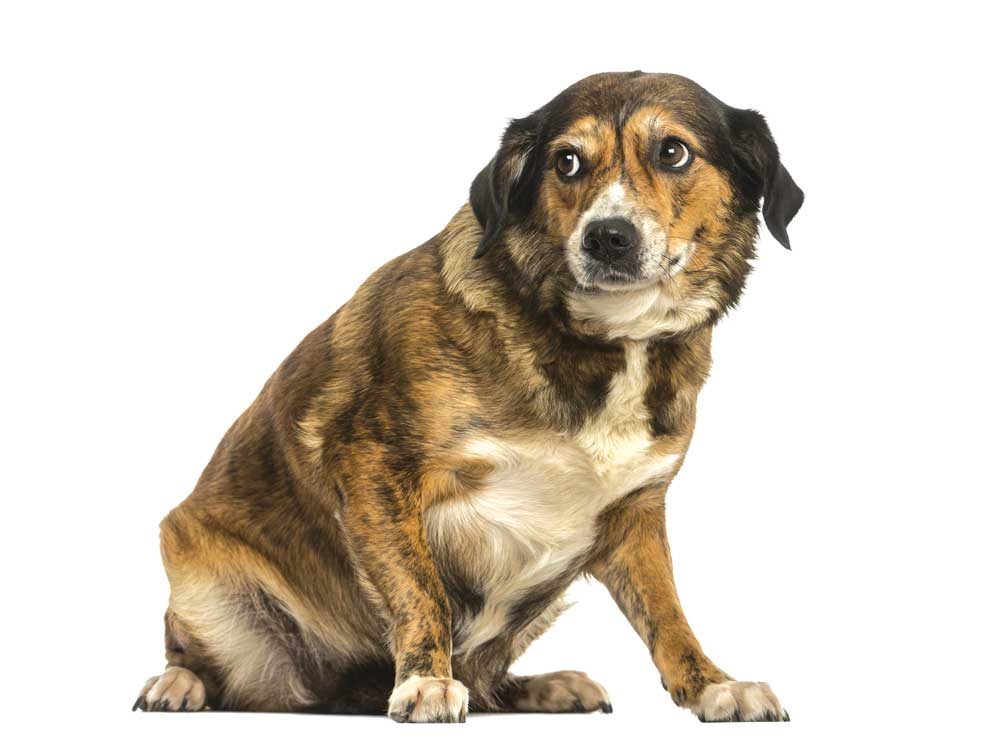 linguaggio del cane: cane stressato stress