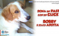 Adozioni a distanza: Bobby dell'associazione Enpa Castelli Romani è stato adottato a distanza da Dogalize!