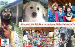 Enpa Val della Torre: aiutiamo l' associazione per animali di Crispa