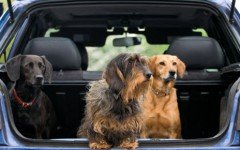 The best car for dogs to travel
