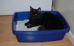 Lettiera per gatti: i consigli su come pulirla
