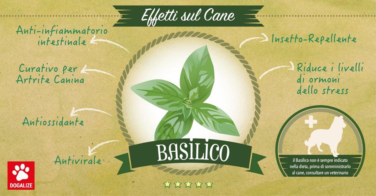 Il basilico; pianta aromatica amica dei cani! Scopri quando è indicata, su Dogalize