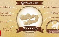 Lo zenzero: pianta amica degli animali, oltre che degli umani!