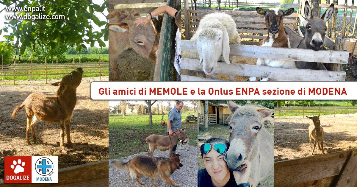 Enpa di Modena: aiutiamo l'associazione di Memole