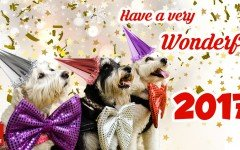 Good year, friends! Tips for a Wonderful 2017 - Dogalize