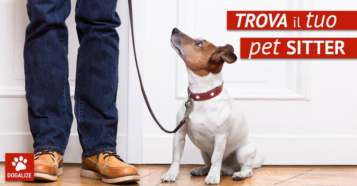 Pet sitter Roma: come trovare assistenza per il cane in città. Scopri i servizi Dogalize per avere la certezza di lasciare il tuo cane nelle mani giuste!