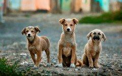 Pet adoption: all about a Pet Adoption Center