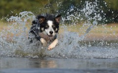 Veterinarian advice: Toxic algae for dogs