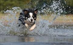Veterinarian advice: Toxic algae for dogs