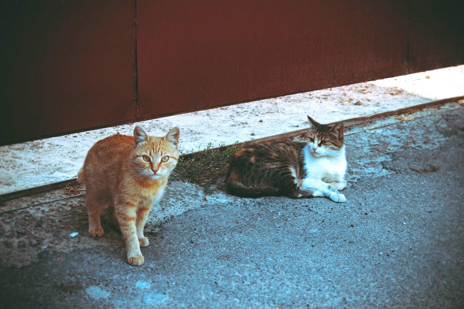 Gatti avvelenati in un parcheggio a Ceriana