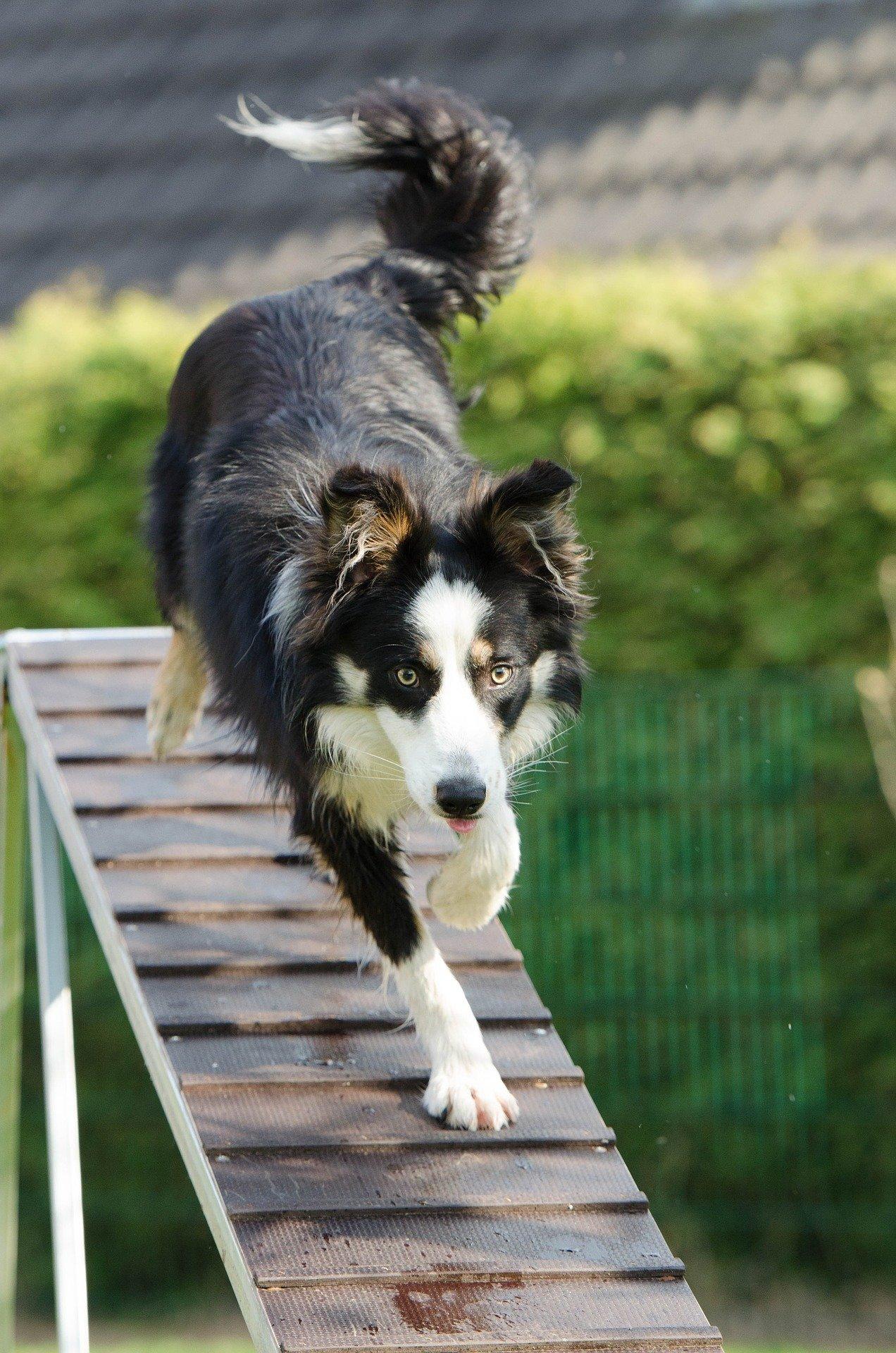 Come addestrare un cane: consigli utili