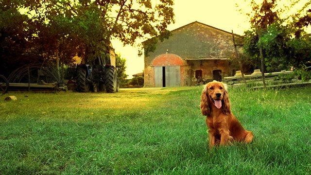 Agriturismo cani ammessi; una gita fuori porta dove mangiare col tuo cane!