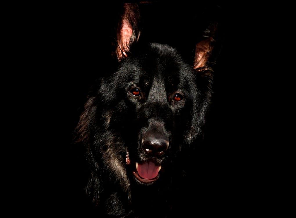 La rabbia del cane malattie cani