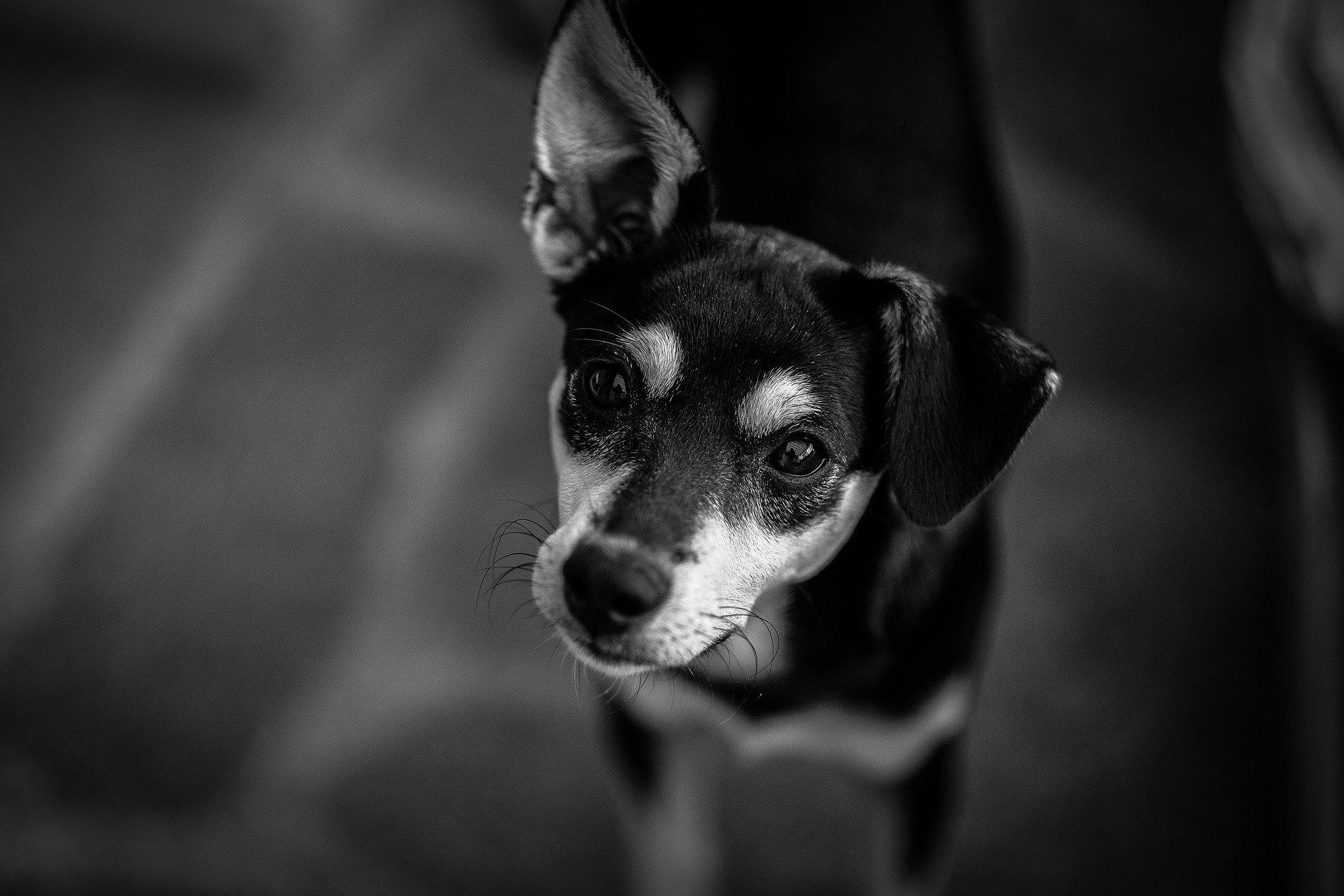 Castrazione del cane quando farla? E' consigliata?