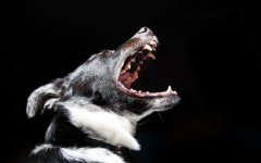 Educacion canina y agresividad canina; somos responsable