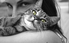 clamidiosi del gatto malattie del gatto