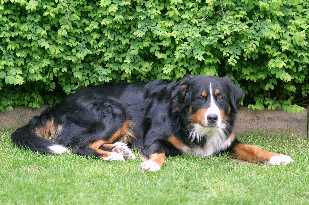 La gestazione del cane: scopri come funziona