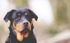 Microchip cani: perchè è importante metterlo
