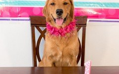 Tarta para perros: elige su receta de tarta favorida