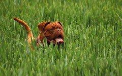 eliminare zecche del cane