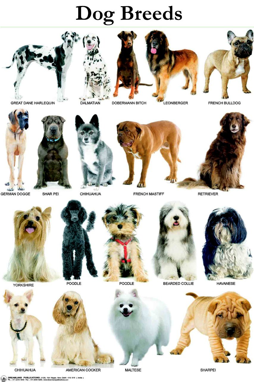 Male Farm Dog Names