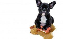 Alimentos tóxicos para perros: prevención para nuestros perros