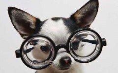 cientificos: Los perros hacen calculos matemáticos