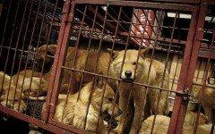 Massacro illegale cani abolito a Moran Market