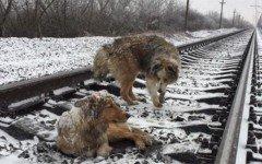 Cane protegge una cagnolina ferita sui binari del treno
