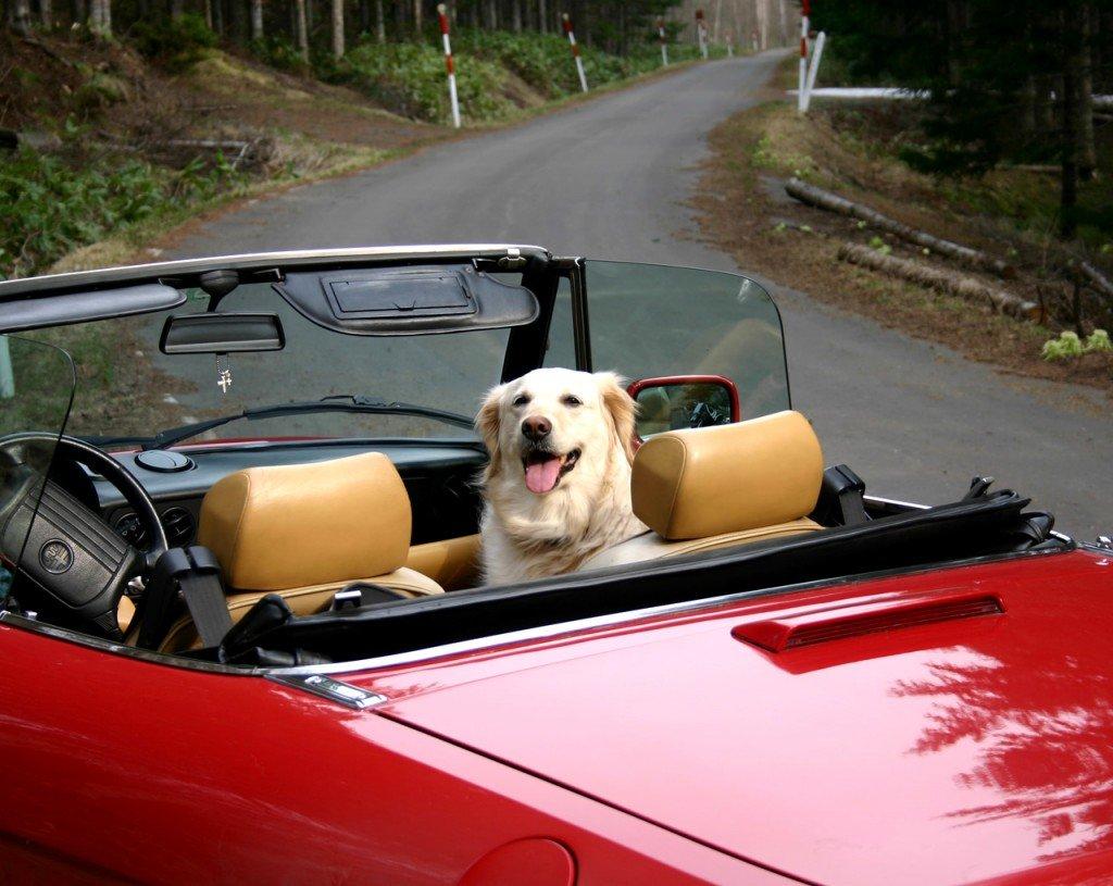"""Storie di cani: """"Aiuto, il cane mi ha chiuso fuori dalla macchina"""", ed è tutto vero!"""