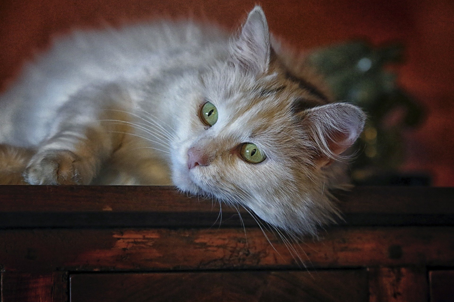 Quante vite hanno gatti, sarà vero il mito delle 7 vite?