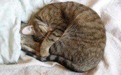 Quanto dorme un gatto: la durata del suo sonno