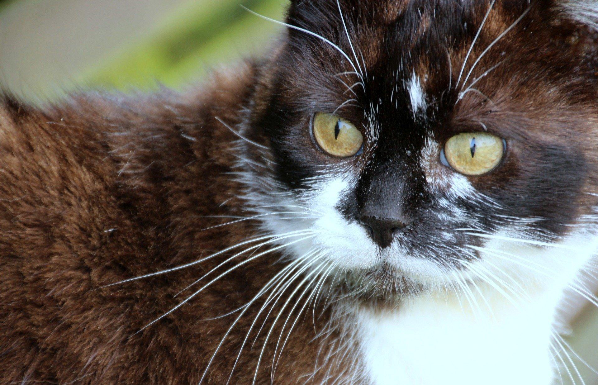Il musetto di un gatto, non è solo bellezza!