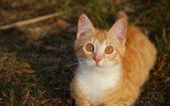 Età dei gatti: quanti anni possono vivere?