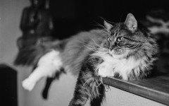 Foto di gatti simpatiche