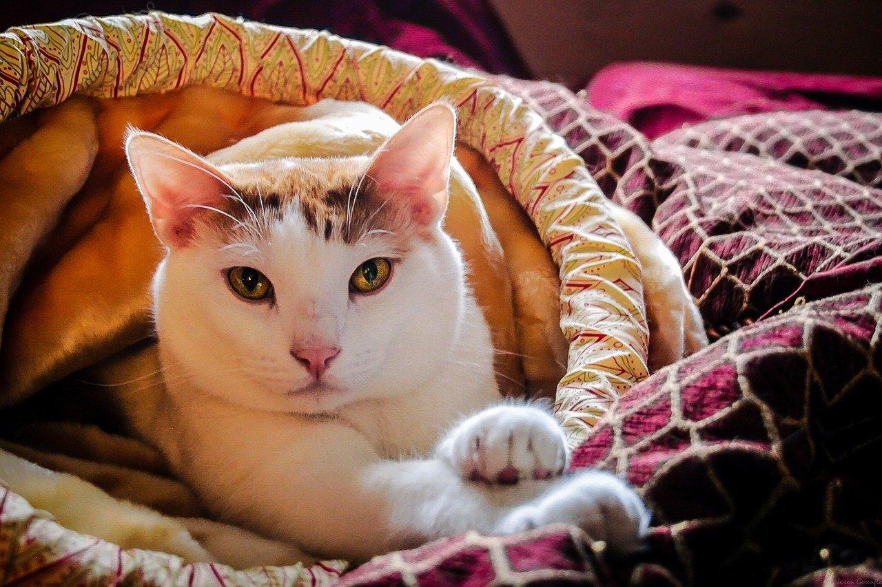 Perché i gatti fanno la pasta: che cosa si intende