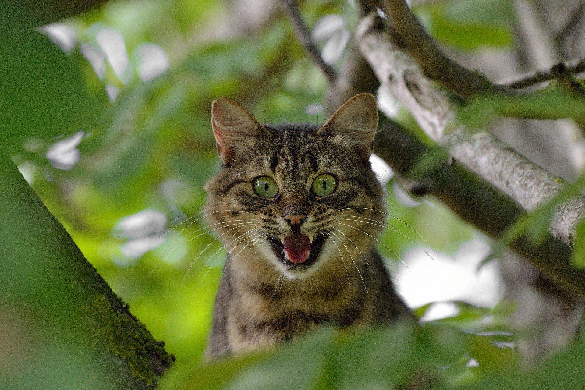 Gatti e cetrioli, perchè i gatti hanno paura dei cetrioli?