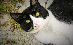 Il linguaggio del gatto, come capire cosa vuole dirti