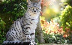 Malattie del gatto: l' insufficienza renale gatto