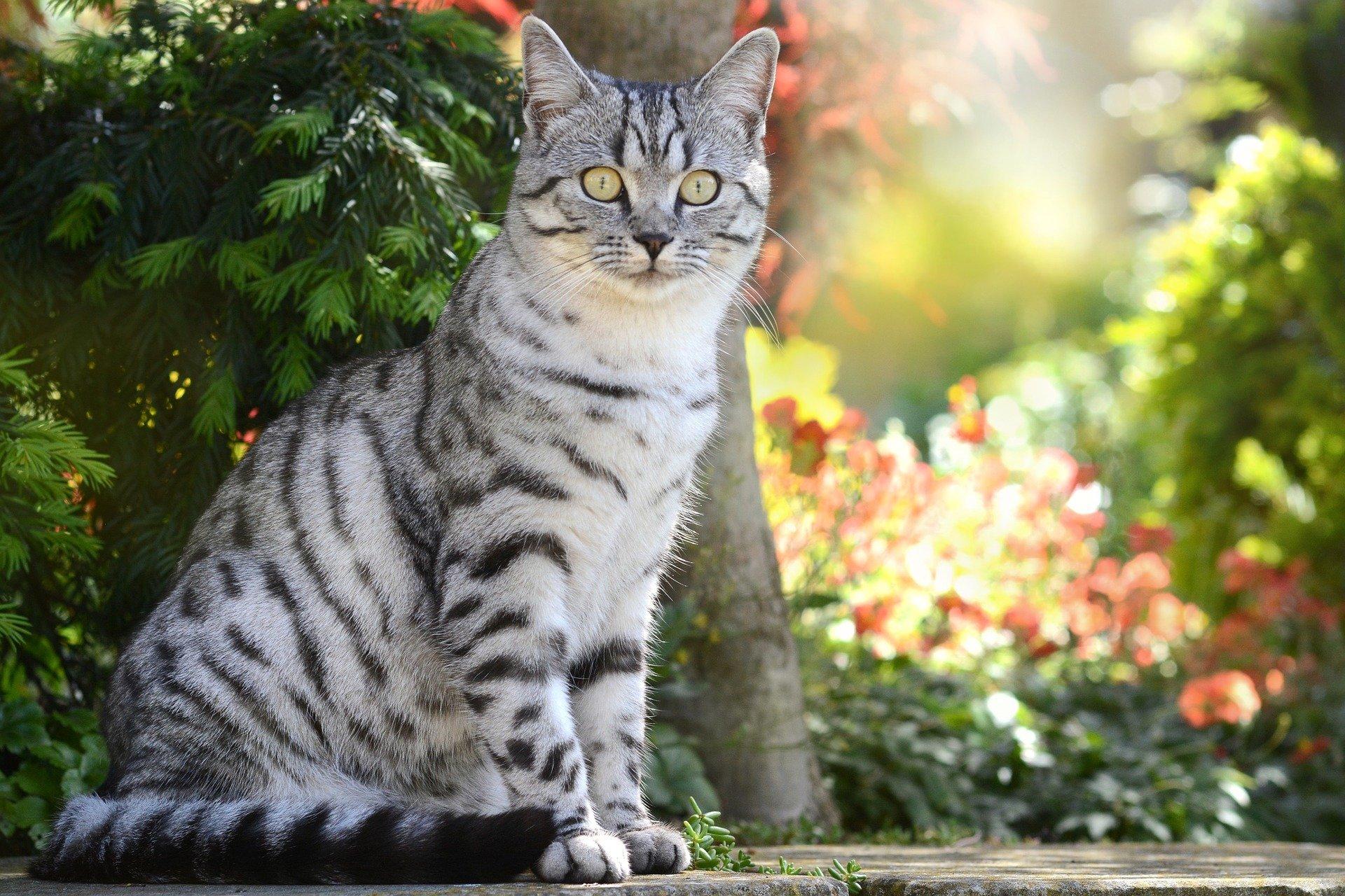 Malattie del gatto: l' insufficienza renale nel gatto