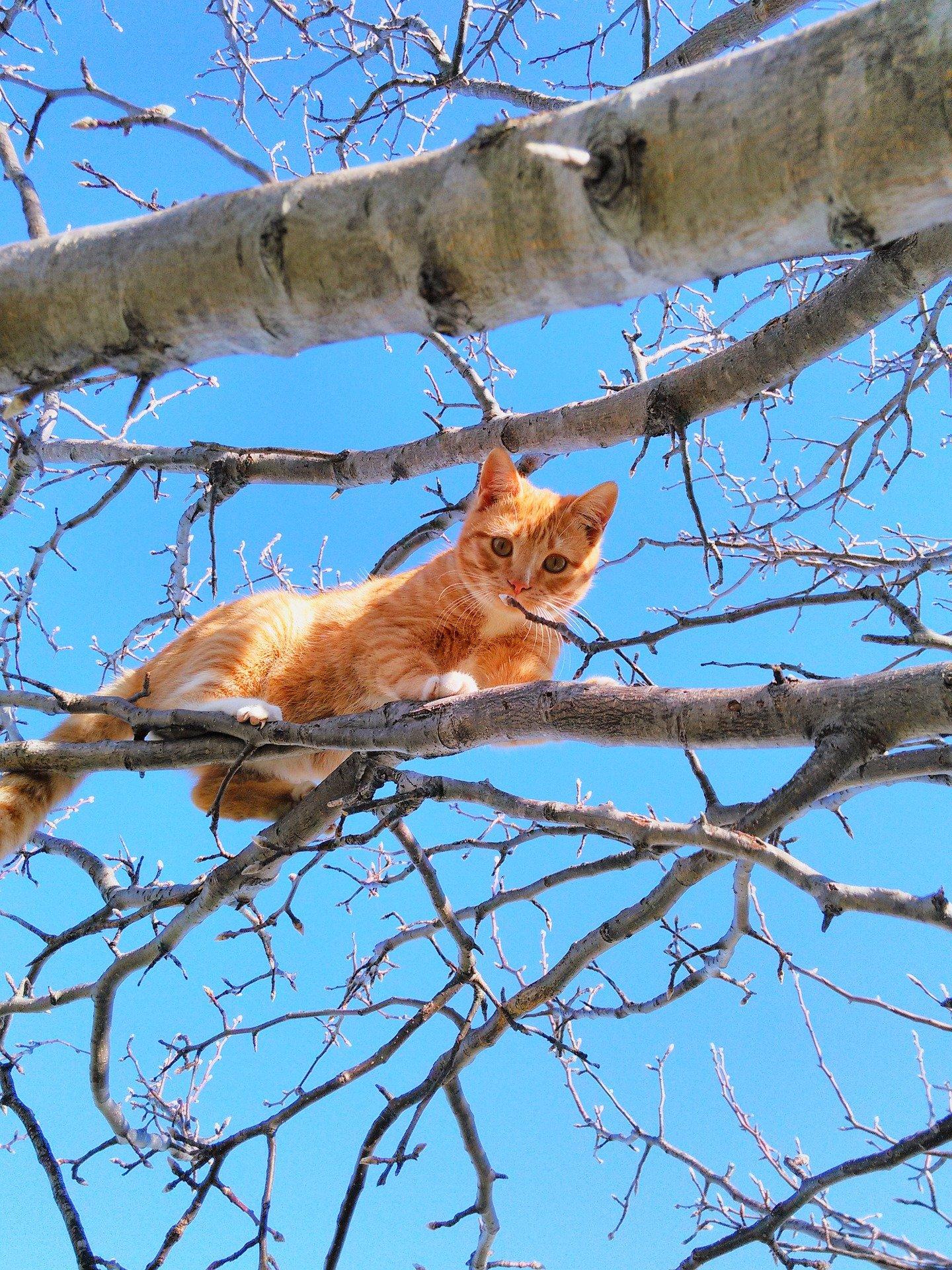 Gatti buffi: il meglio che si può trovare sul web