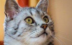 Vita media gatto: ecco la sua durata e gli anni corrispondenti