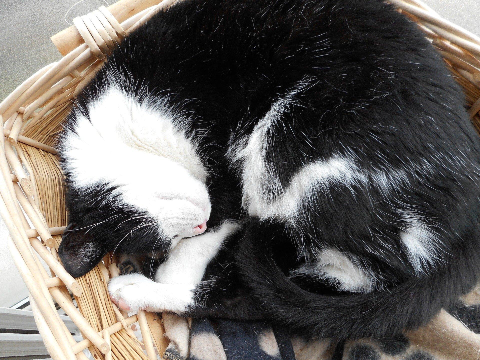 Gatto che dorme, quante ore rappresentano la normalità
