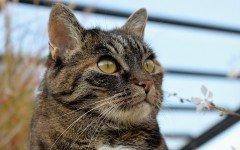Feromoni per gatti, cosa sono e a che servono