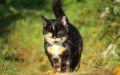 La sterilizzazione della gatta: perchè è importante