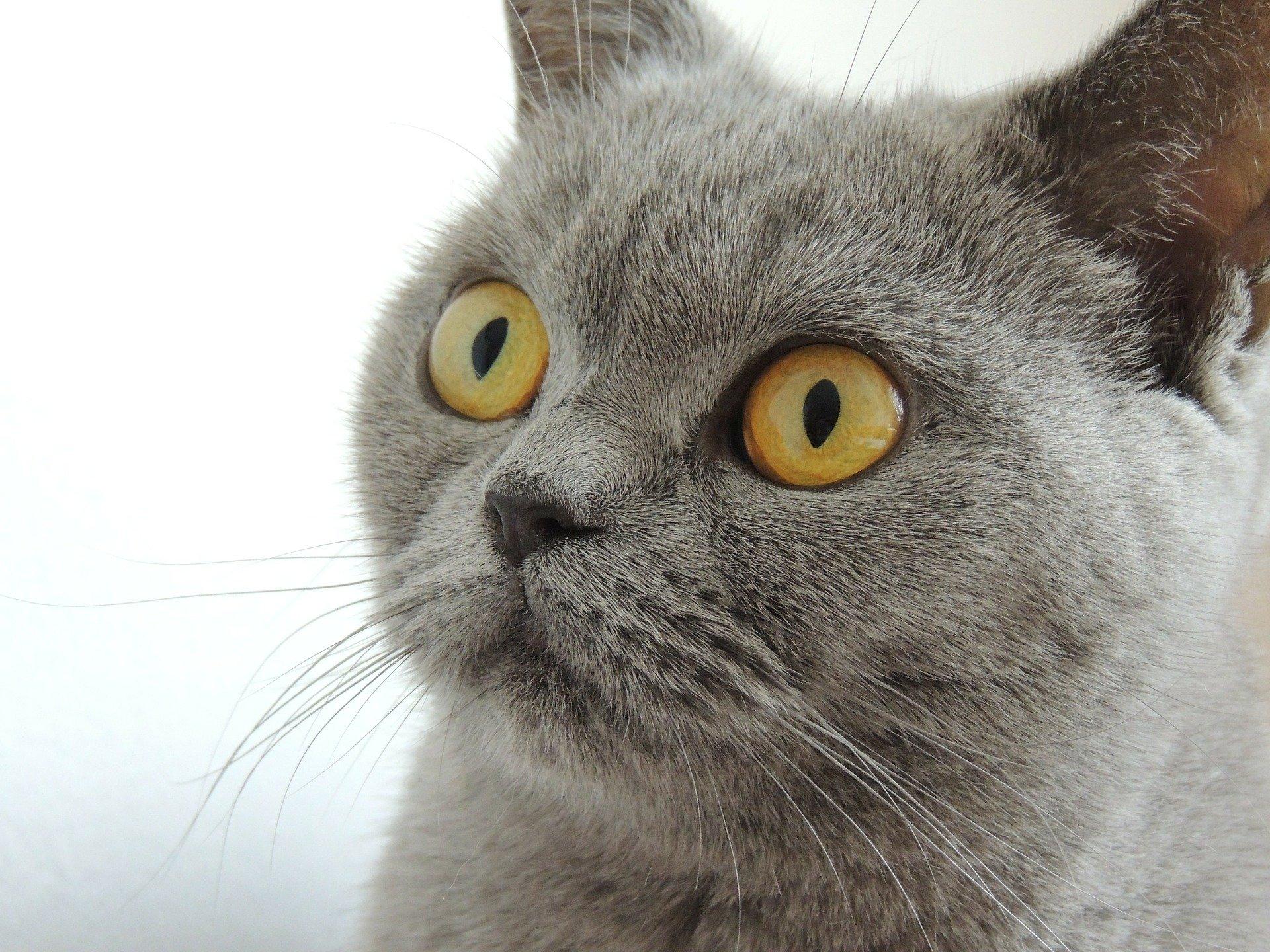 Poesie sui gatti alcune tra le più belle che sono state scritte
