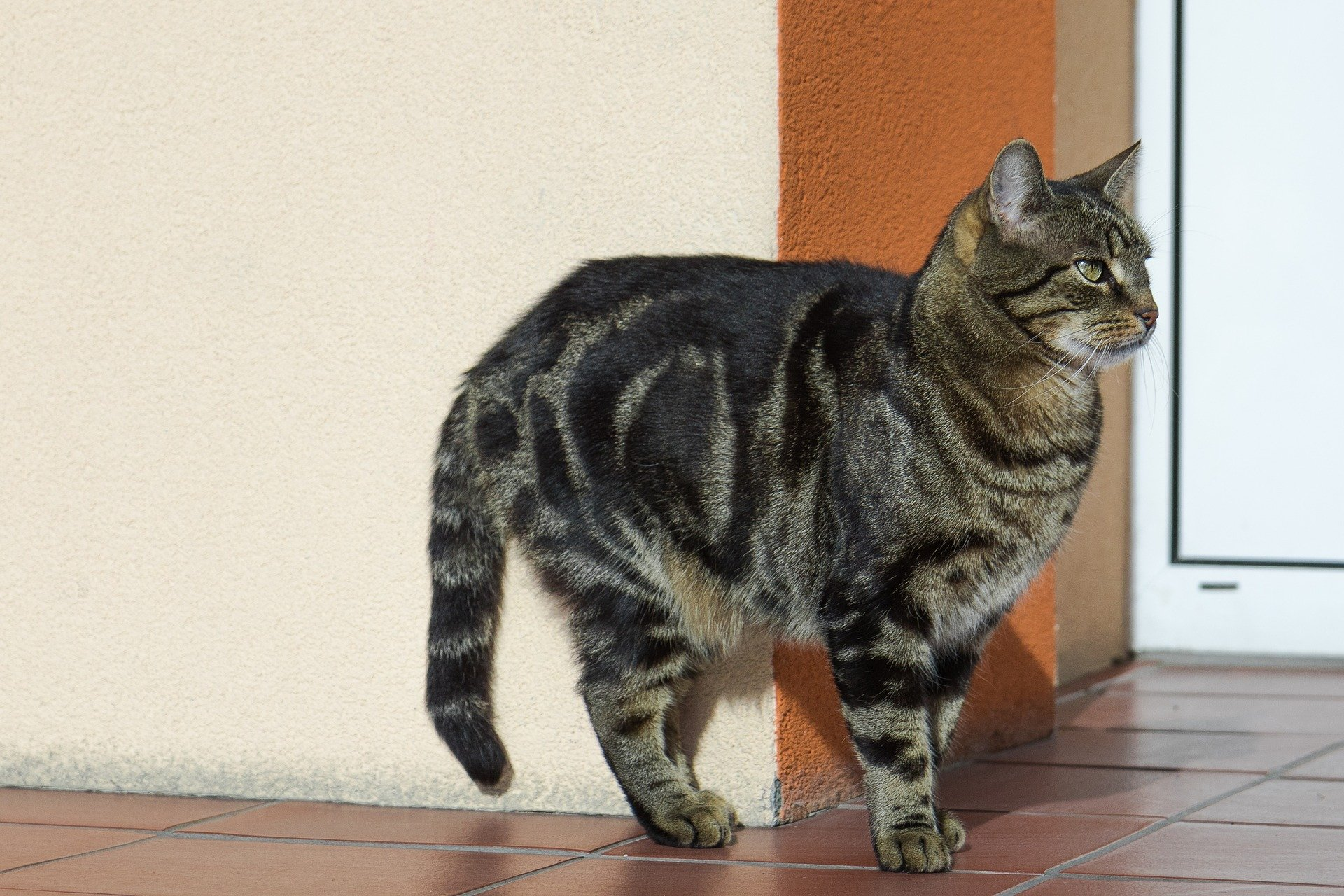 Comportamento dei gatti: capire il nostro amico felino