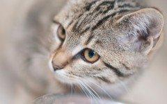 Nasello bollito per gatti: una prelibatezza