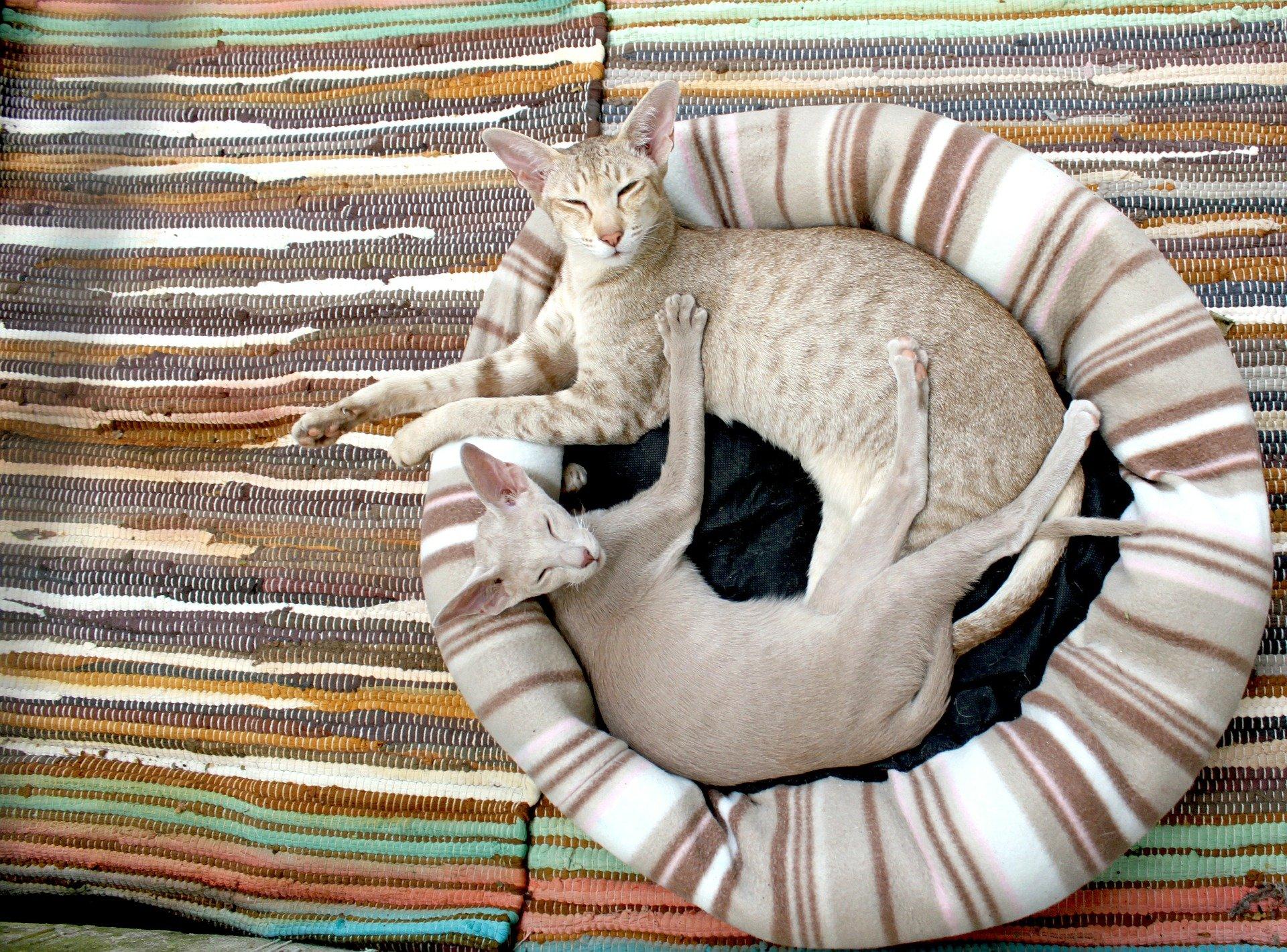 Cucce per gatti, come scegliere quella ideale