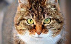 Nomi gatti maschi, i criteri per scegliere quello giusto, alcuni consigli